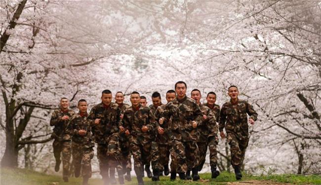训练场地樱花开 武警安